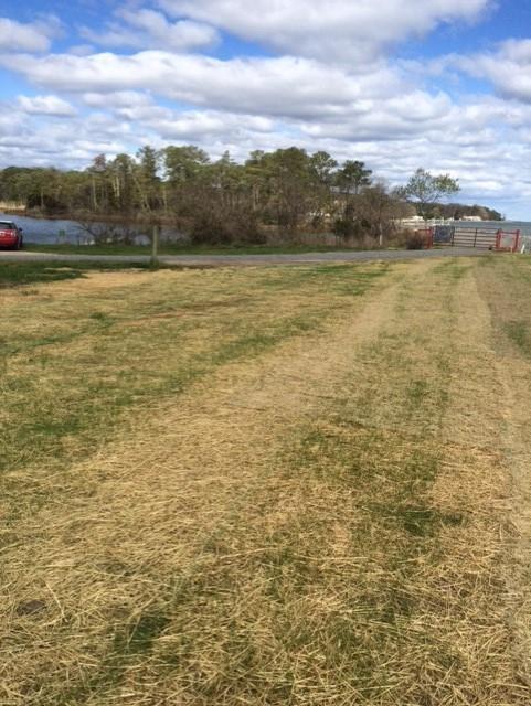 common area grass 2 april 7